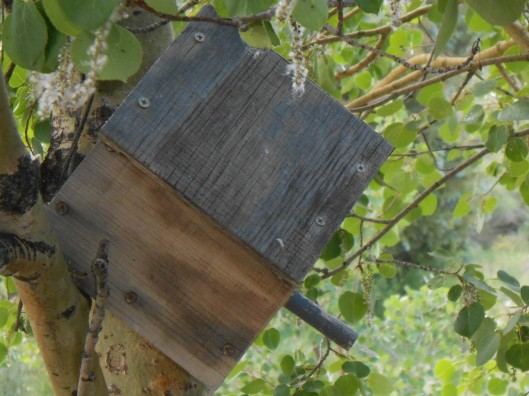 The old birdhouse (in spite of its' odd angle, still used by nesting birds every spring)