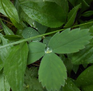rainy day pix 032