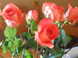 Roses are peach!